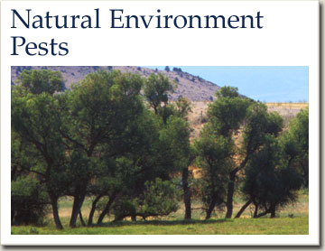 natural environment pests