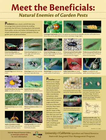 Beneficial Insects Natural-enemies-poster
