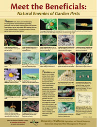 Natural Enemies of Plant Pests poster