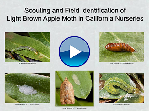 Field identification video