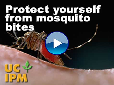 Link to mosquito bites video.