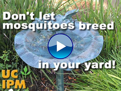 Link to mosquito prevention video.