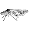 Link to leafhoppers, treehoppers, sharpshooters, spittlebugs