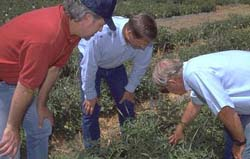 Photo of Jim Stapleton, Jeff Mitchell, and Charles Summers examining mulch.