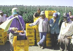 Photo of Mexican workers in train-the-trainer collaboration