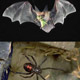 information for managing bats, spiders in urban settings