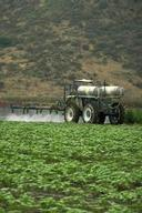 High-pressure tractor sprayer application to field sunflowers.