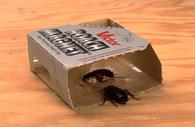 cockroach sticky  trap.