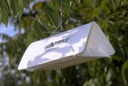 Delta traps may be used to monitor codling moth.