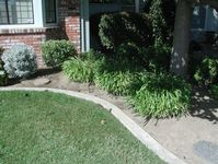 Mowing strips can prevent weeds from moving into other areas.