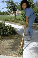 A sharp scuffle hoe will cut weeds near the soil surface.