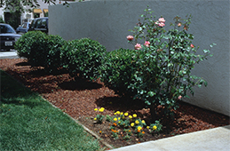 Rock mulch on top landscape fabric