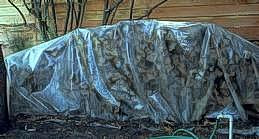 Logs sealed under tarp