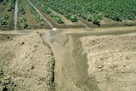Irrigation tailwater runoff from a bean field.