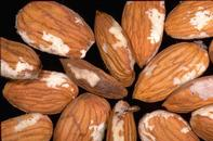 Oriental fruit moth damage to almonds.