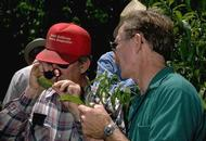 Walt Bentley talks to grower while looking at almond leaf with hand lens.