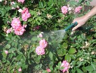forceful spray knocks off pests