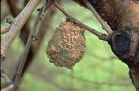 Photo of dry fruit mummy