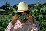Photo of vineyard worker
