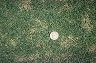 Dollar spot, caused by Sclerotinia homeocarpa, in a lawn.
