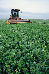 Mechanical harvester in alfalfa field.