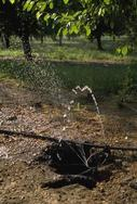 Water spraying from a microsprinkler damaged by California ground squirrel