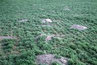 Ground squirrel mounds