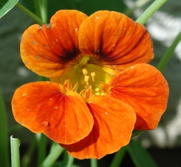 Bright orange blossom
