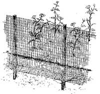 Bury a rabbit fence at least 6 to 10 inches and turn the bottom portion of the fence outward to prevent rabbits from digging beneath it.