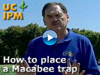 Macbee placement video