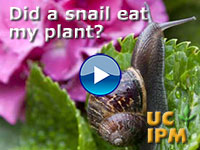 Did a snail eat my plant?