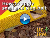 How to apply snail and slug bait
