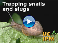 Trapping snails and slugs