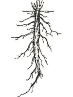 SCIENCE BLOG. YEAR 4: PARTS OF PLANTS: ROOTS